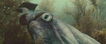 Океаны - фильм 2009